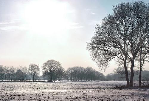 Winter Wonderland Olen