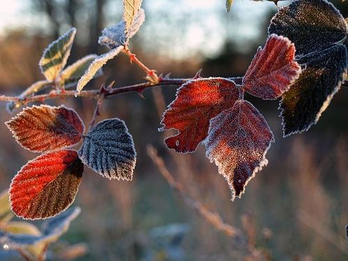Meteorological Winter Arrives at GSFC