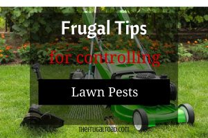 controlling lawn pests